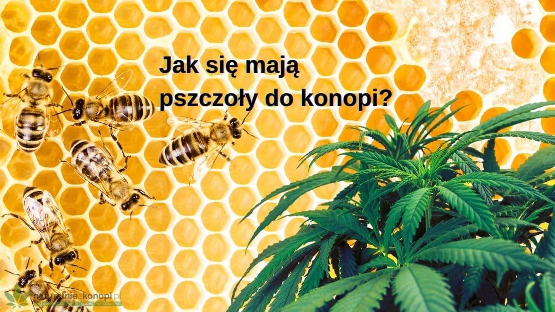 Jak się mają pszczoły do konopi?