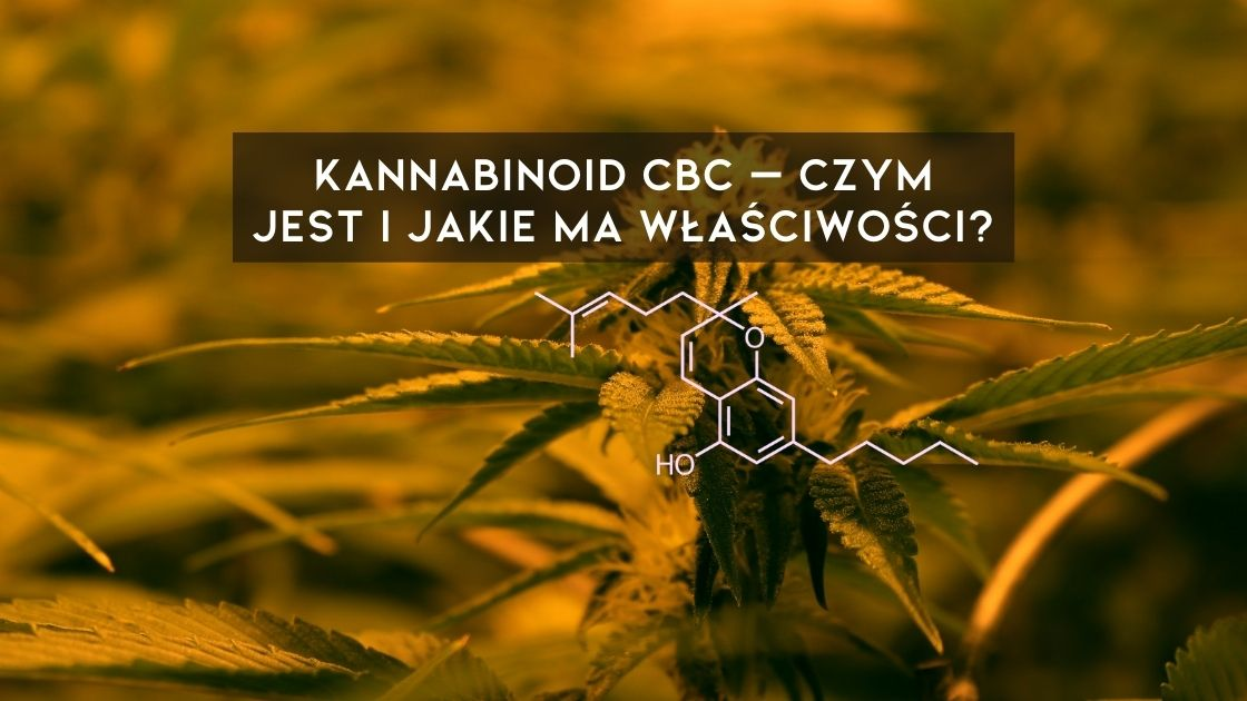 Kannabinoid CBC, a inaczej kannabichromen - składnik konopi