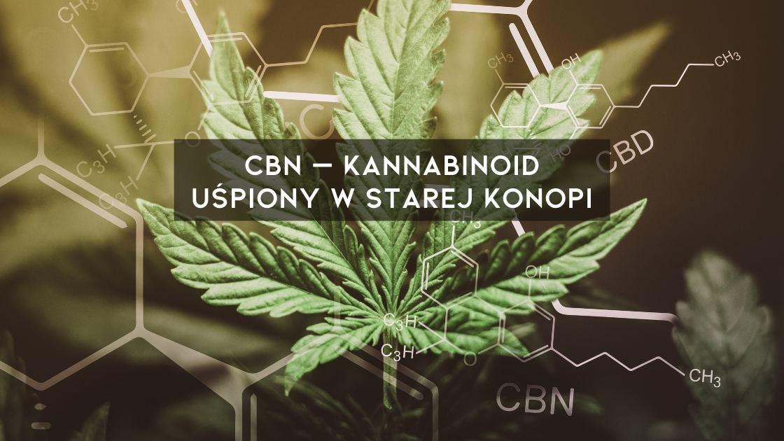 Kannabinol CBN jest to kannabinoid, który oferuje różnorodne właściwości zdrowotne
